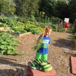 harvest-child
